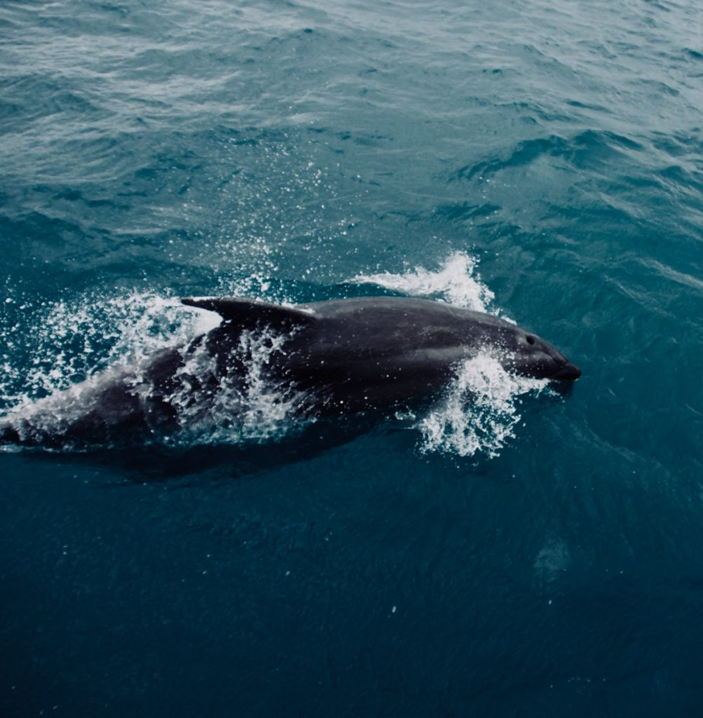 black and white whale on blue water during daytime